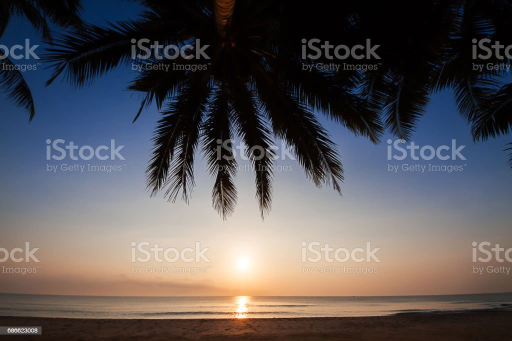 Silhouette of coconut tree on the beach during sunrise royalty-free stock photo