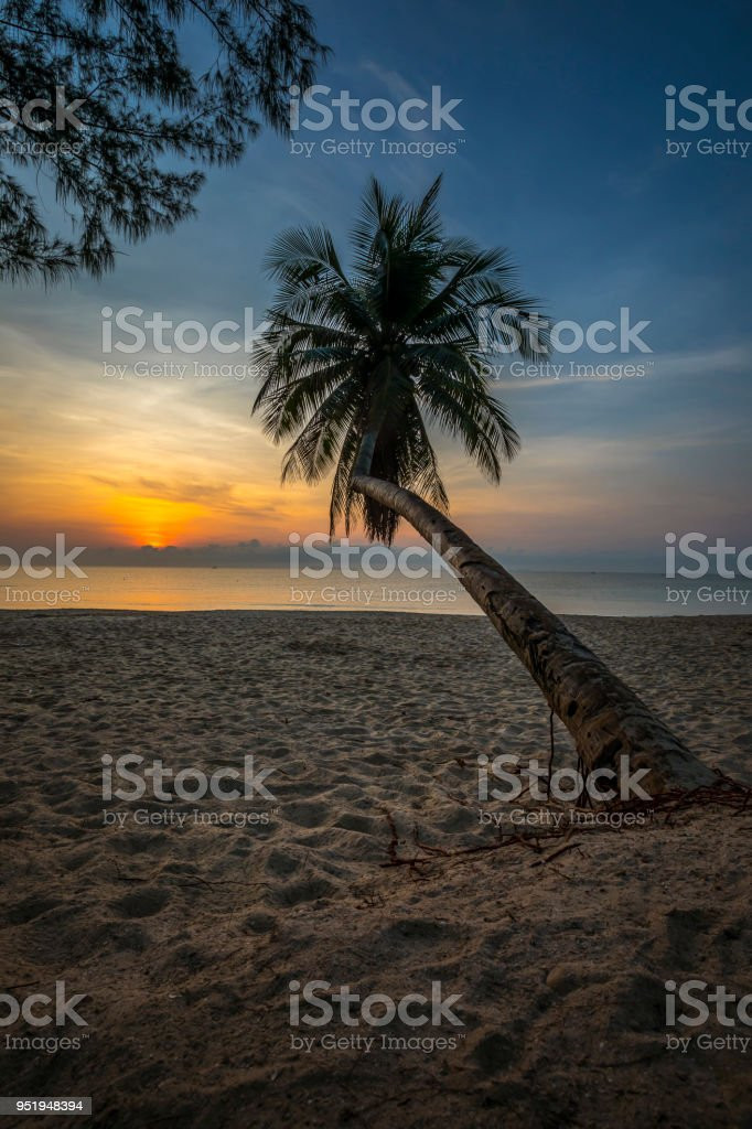 Silhouette of coconut tree with sea and beach view in the morning. stock photo