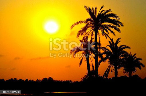Silhouette makes this image more beautiful. sunset time in winter. There are a little pond in-front of palm tree, that is why there is a reflection of sun rays...