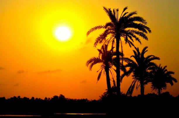 silhouette der dattelpalme - urlaub in tunesien stock-fotos und bilder