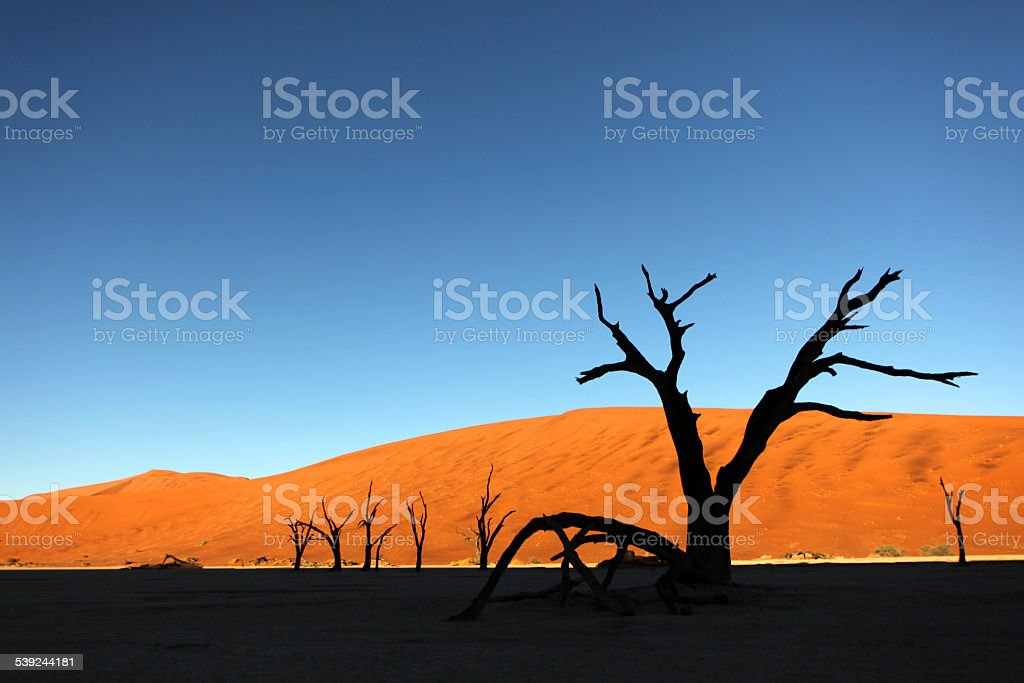 Silhouette of Dead Trees at Deadvlei, Sossusvlei in Namibia royalty-free stock photo