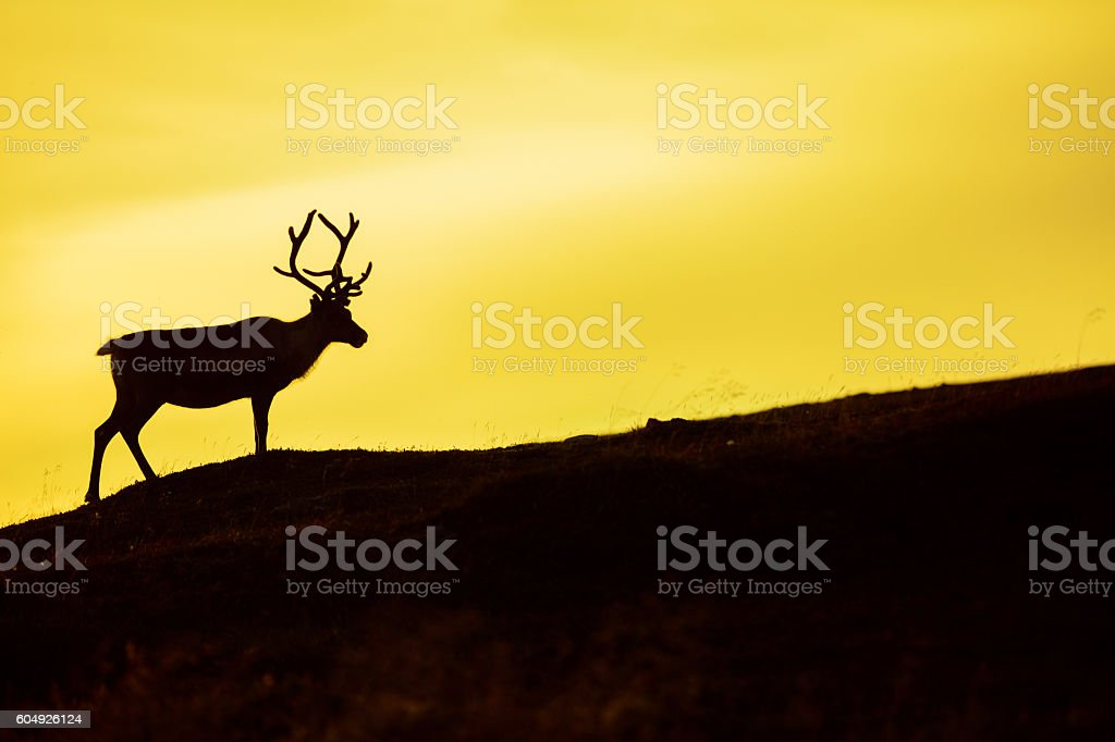 Silhouette of deer against sky at sunset stock photo