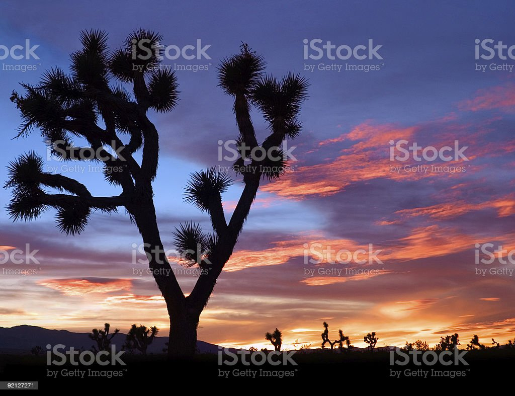 Silhouette of desert plants against a Mojave sunset stock photo