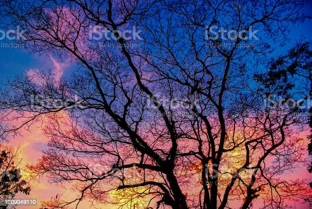 Photo of Silhouette of dry tree at colorful sunset.