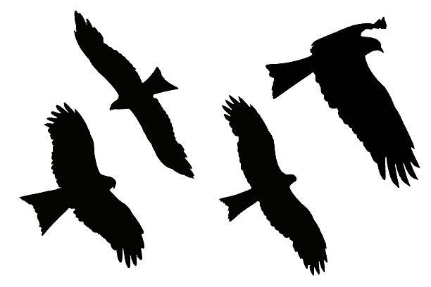 silhouette der adler-black kite - chinesische zeichen tattoos stock-fotos und bilder