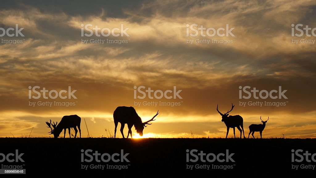 Silhouette of Elks – Foto