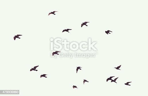 Silhouette of flying pigeons
