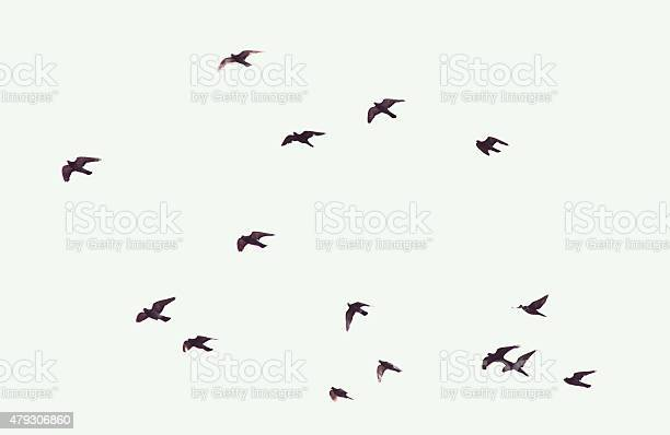 Photo of Silhouette of flying pigeons