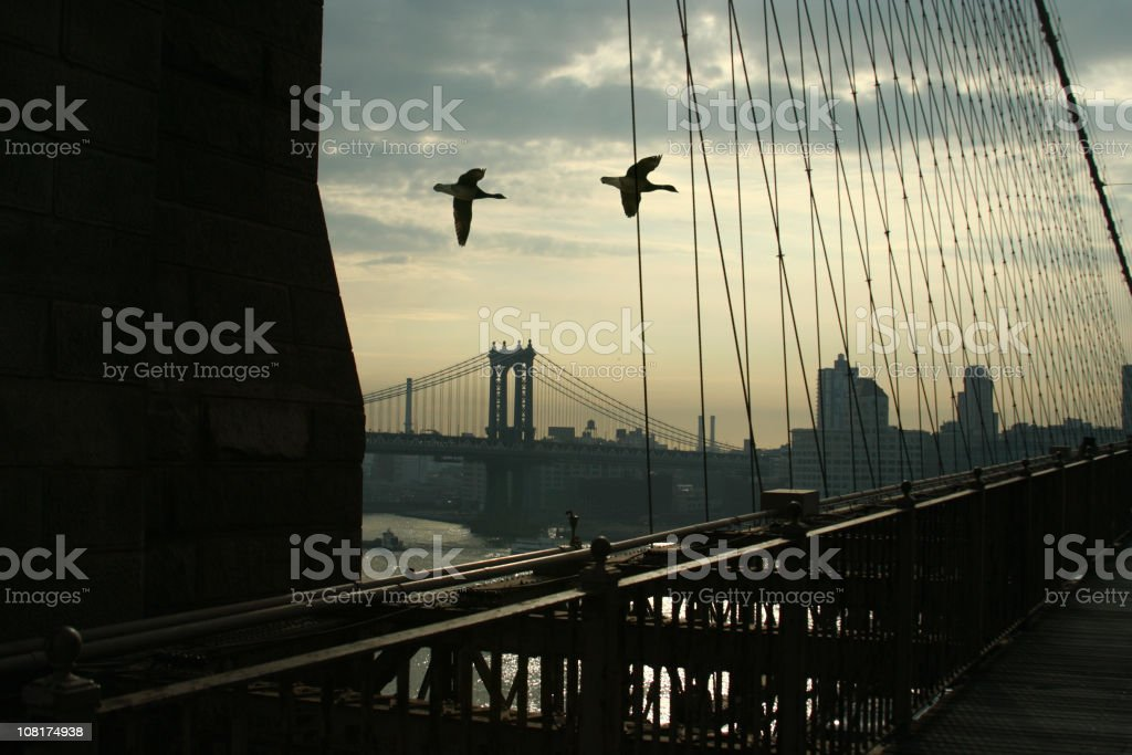 Silhouette of Geese Flying Past Manhattan and Brooklyn Bridge royalty-free stock photo