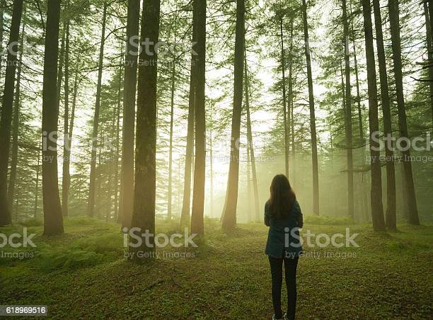 Photo of Silhouette of girl standing alone in pine forest at twilight.
