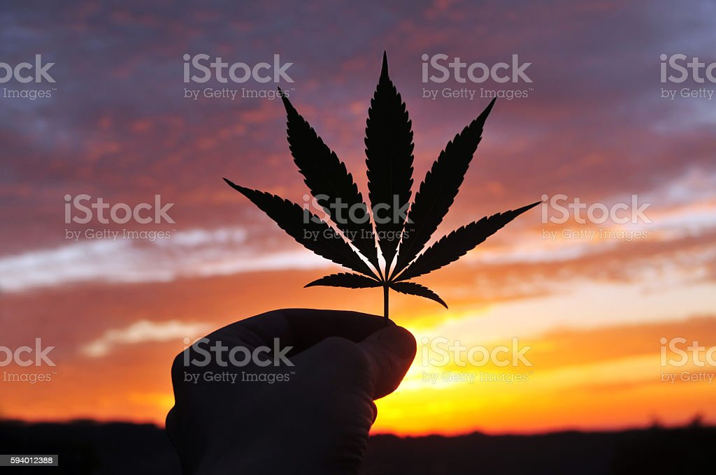 Silhouette of hand, holding cannabis leaf at sunrise – Foto