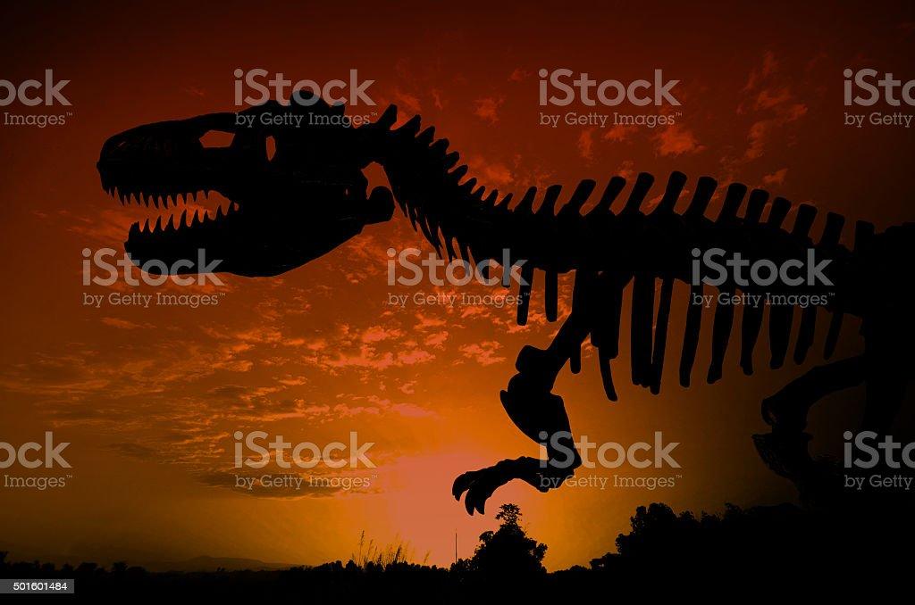 silhouette of huge dinosaurs skeleton stock photo