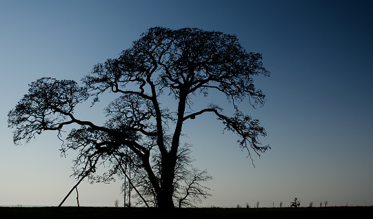 Silhouette of large tree with a swing by the sea.