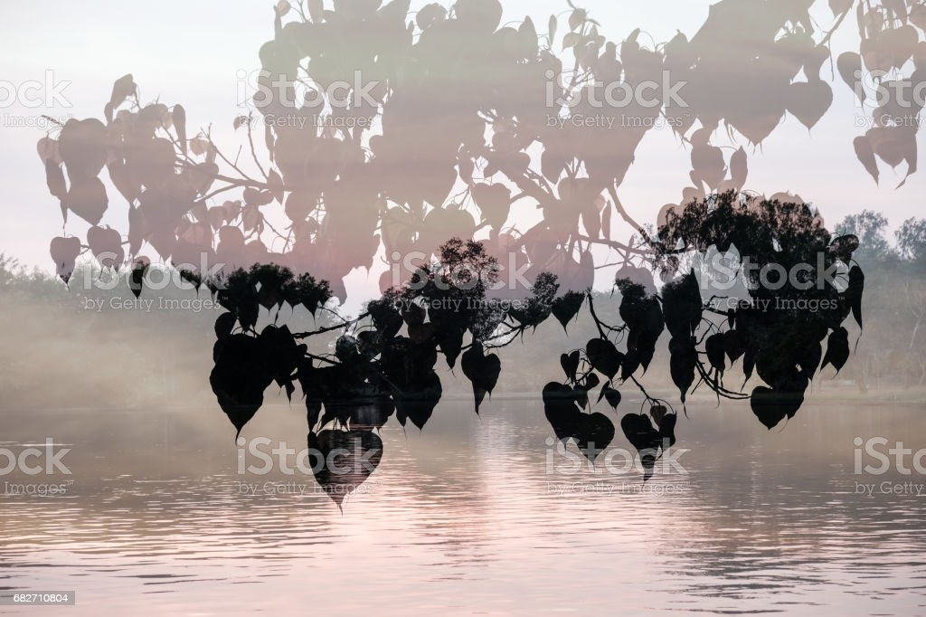 Silhouette of Leaves of Bo Tree superimposed on river background. stock photo