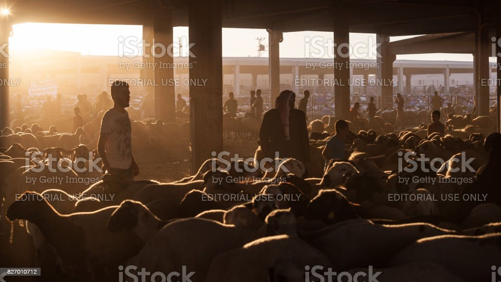 Silhouette du marché aux enchères de bétail au Down à la veille de l'Aïd Al-Adha - Photo