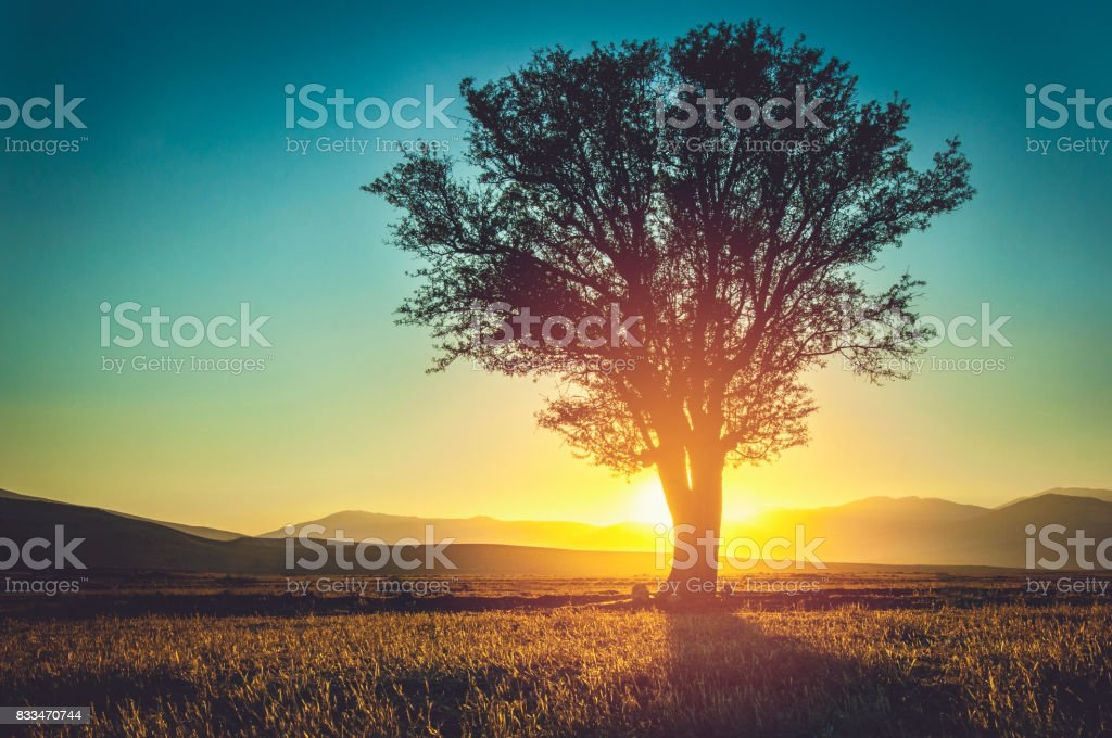 Silhouette of Lonely tree - foto stock