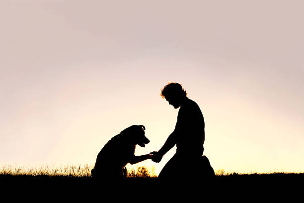 Silhouette of Man Shaking Hands with his Loyal Pet Dog stock photo