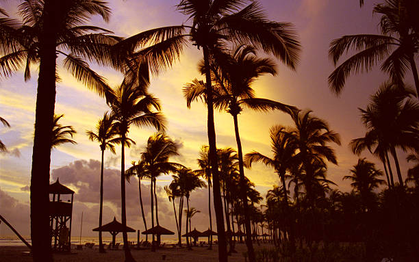 Silhouette of Palm Trees on Beach, Sunset at Ivory Coast  côte d'ivoire stock pictures, royalty-free photos & images