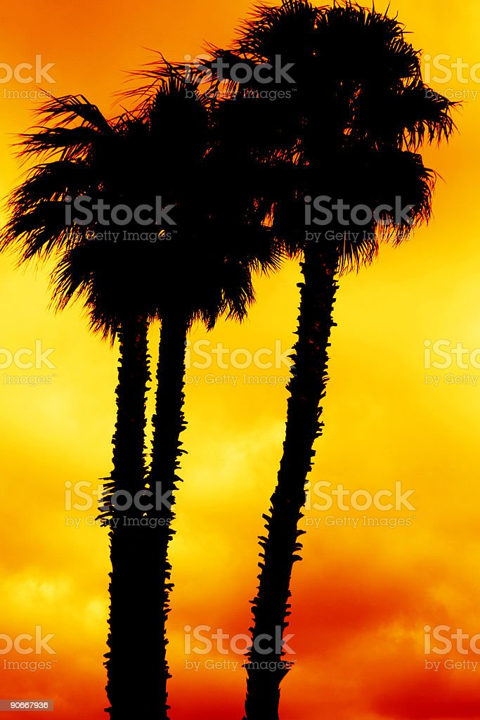 silhouette of palms royalty-free stock photo
