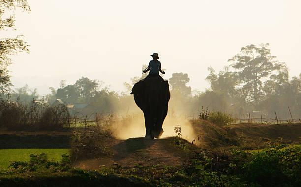 silhouette von menschen mit elefanten auf dem weg - elefanten umriss stock-fotos und bilder