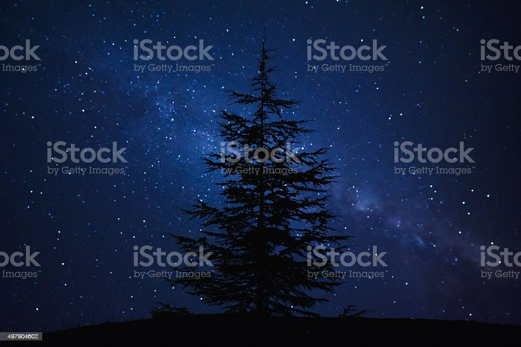 Silhouette of Pine Tree and Milky Way stock photo