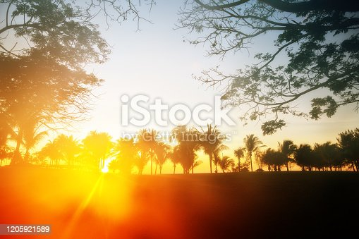 Silhouette of plam trees with colourful sunse