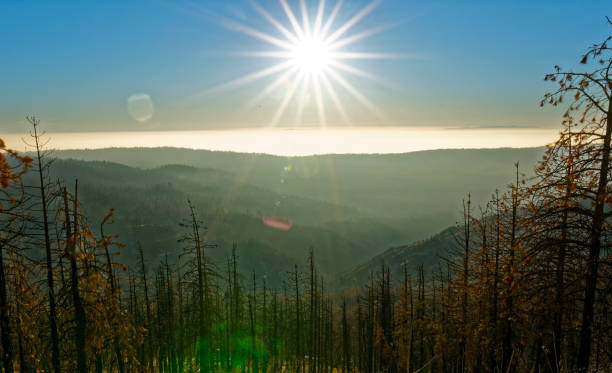 Silhouette of recently burned trees in the sunset with star sun stock photo