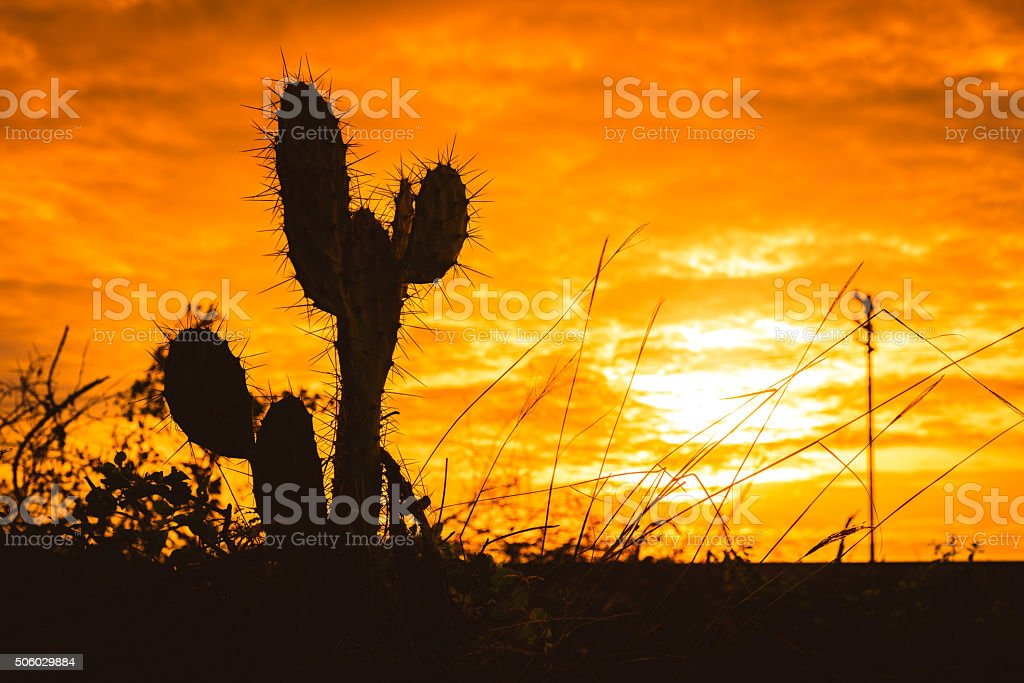 Silhouette of Saguaro Cactus at Sunset stock photo
