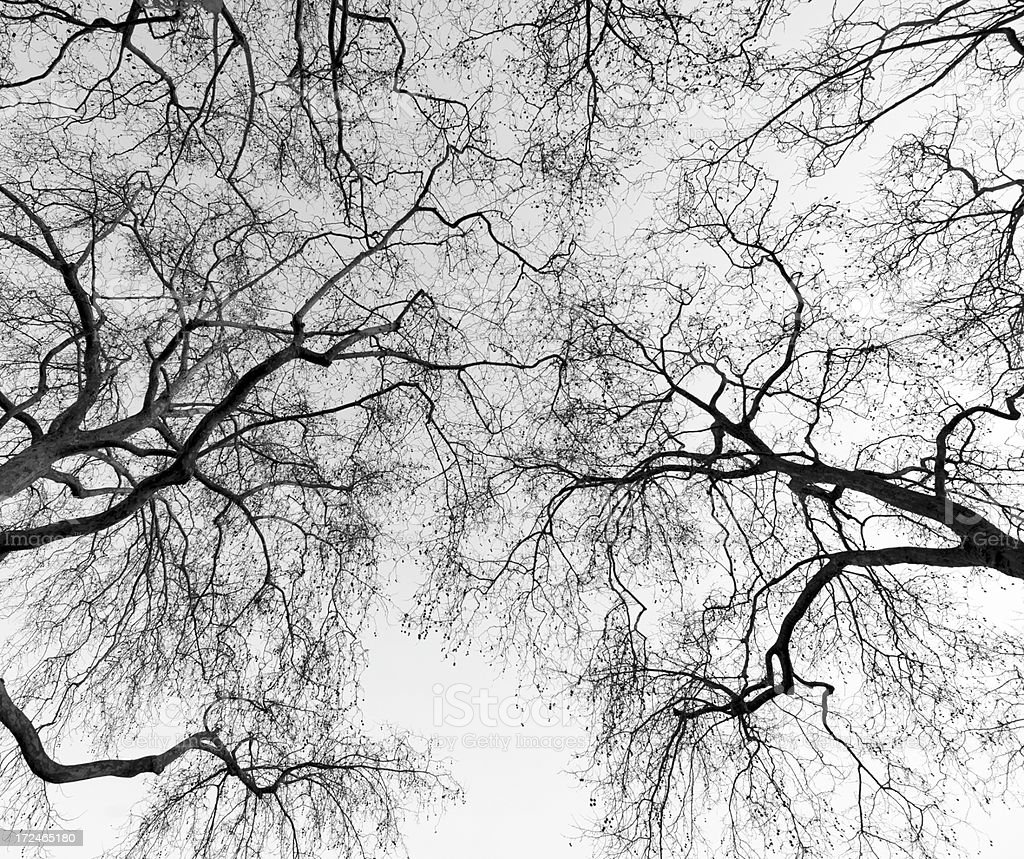 Silhouette of scary trees black and white royalty-free stock photo