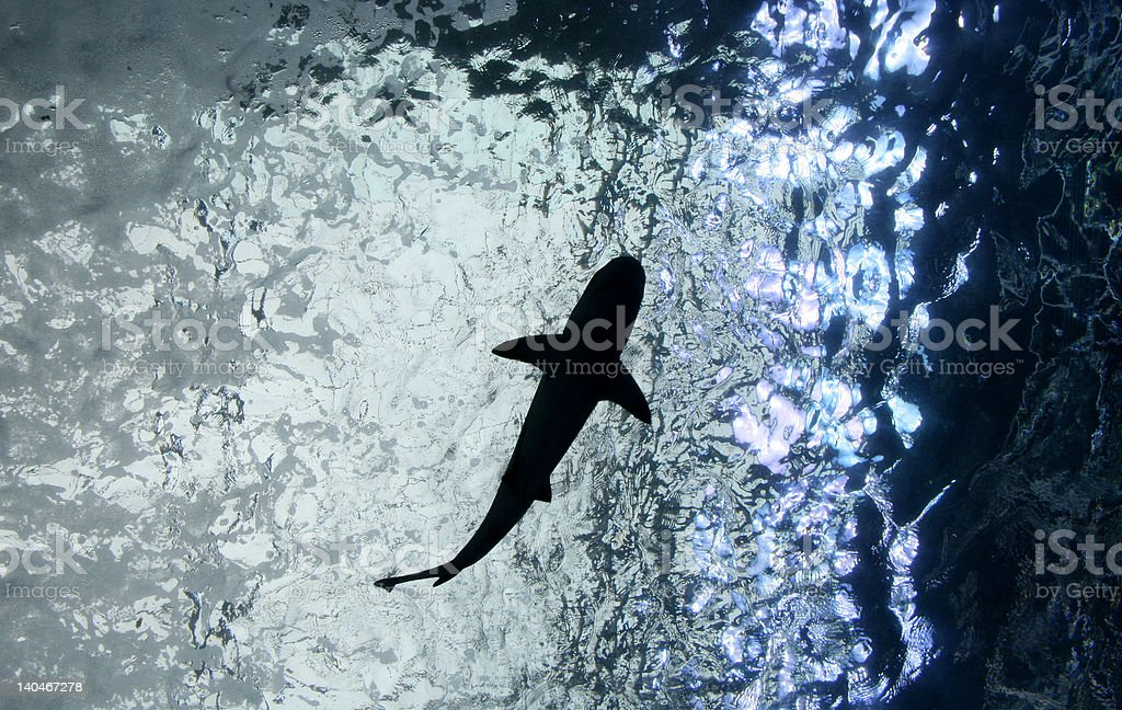 Silhouette of Shark Circling Above stock photo