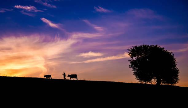 Silhouette von Hirten, Kühe und Baum vor Sonnenuntergang Himmel – Foto