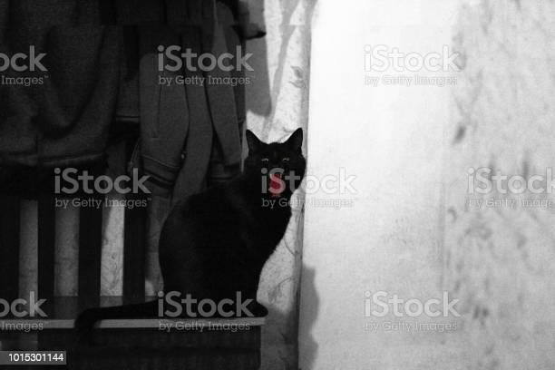 Silhouette of spooky black cat in halloween night black and white picture id1015301144?b=1&k=6&m=1015301144&s=612x612&h=gsuqsgekmaq45p1q ea9r2nzrq1qe4t qnzinvg 75c=