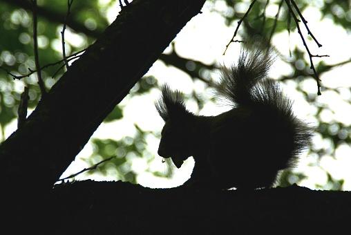 나무위  다람쥐의 실루엣