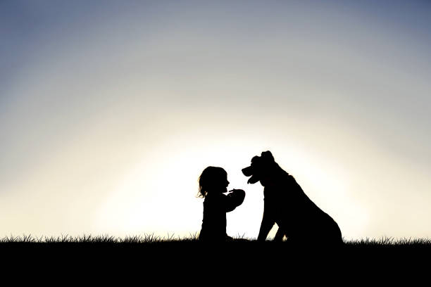 Silhouette of Sweet Little Child Sitting Outside with her Loyal Family Pet Dog stock photo