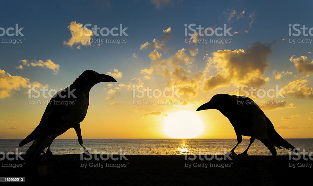 silhouette of the crows at sunset stock photo