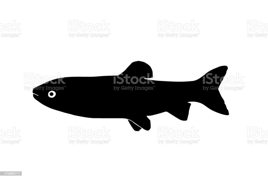 Silhouette de poissons amur - Photo