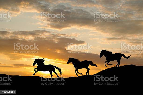 Silhouette of three wild horses galloping by colorful sunset picture id463625381?b=1&k=6&m=463625381&s=612x612&h=tzhdrxpawp0 cumstxrfjsfjbg3dfnzju7dya1y4fjm=