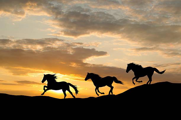 Silhouette of three wild horses galloping by colorful sunset picture id463625381?b=1&k=6&m=463625381&s=612x612&w=0&h=gm gxs36nahk9zsz6yixufmwexqhalnllotq9jmwj8i=