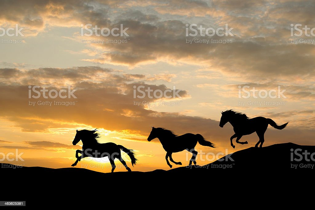 Silhouette of three wild horses galloping by colorful sunset stock photo