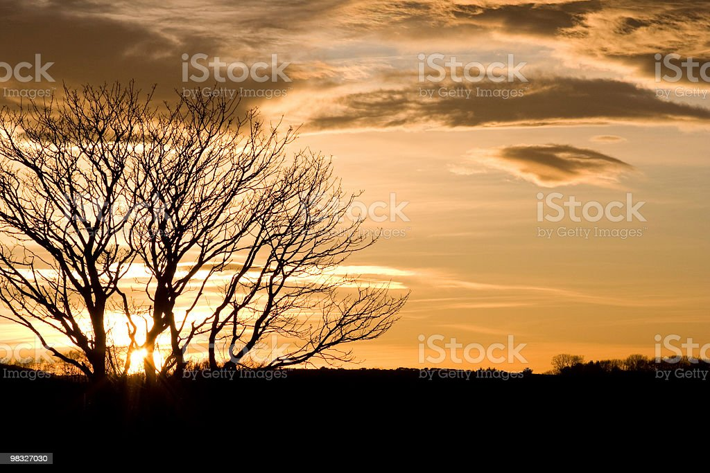 Sagoma di albero contro il tramonto foto stock royalty-free