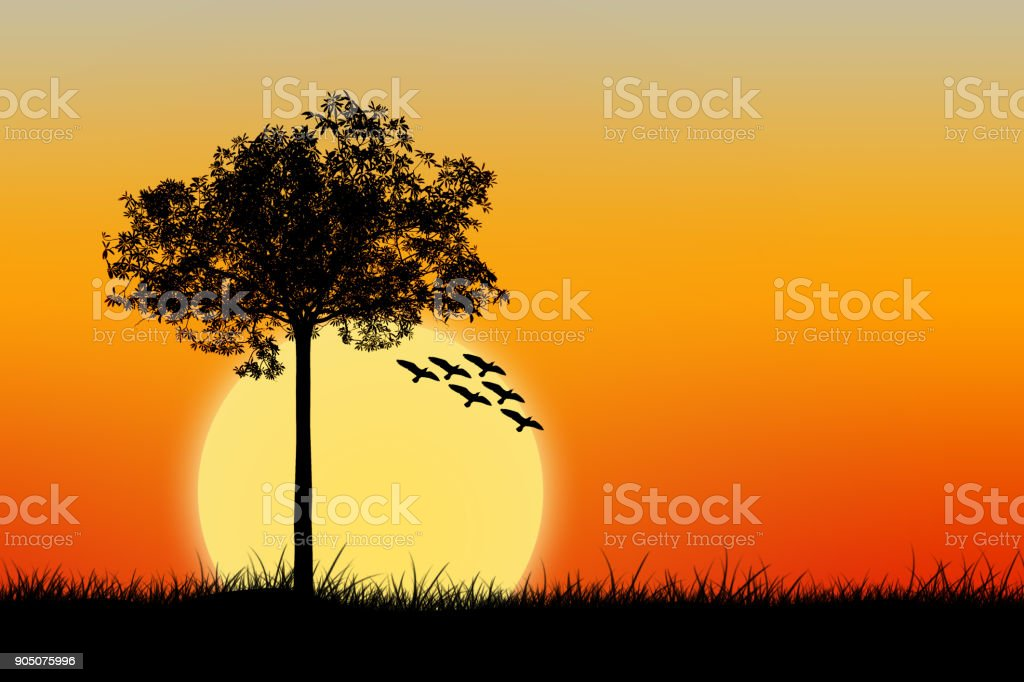 Silhouette of tree and birds stock photo