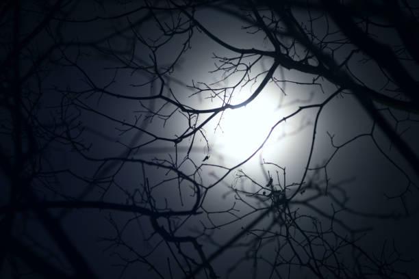 満月の光の背景の木の枝のシルエット ストックフォト