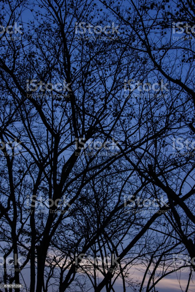 silhouette de branches d'arbres photo libre de droits