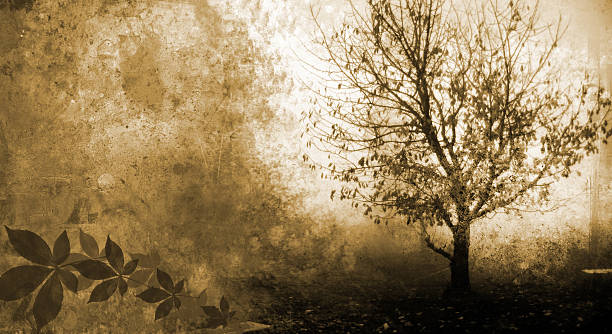silhueta de grunge de árvore - jardim do eden - fotografias e filmes do acervo