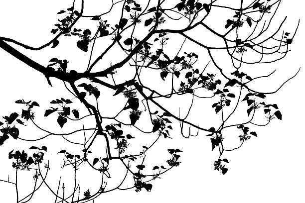 dessin arbre noir et blanc photos et images libres de droits istock. Black Bedroom Furniture Sets. Home Design Ideas
