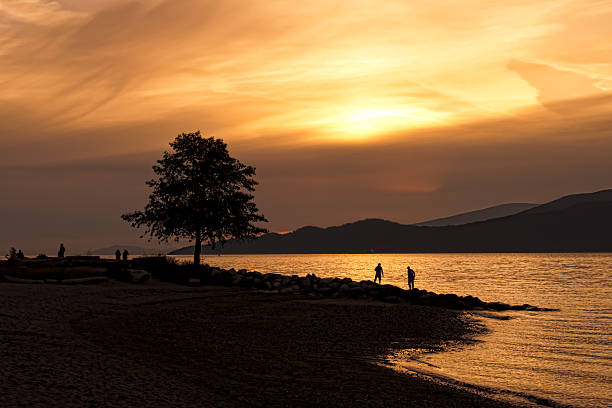 Silhouette Of Tree on Beach At Sunset stock photo