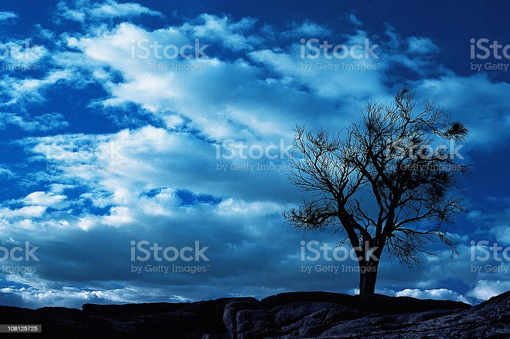 Silhouette of Tree on Rocks in Australian Outback royalty-free stock photo