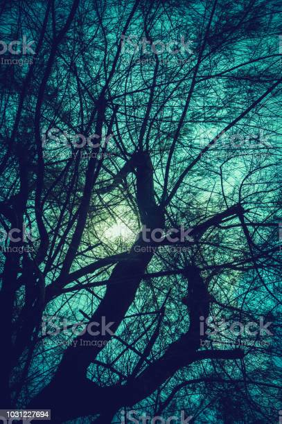 Photo of Silhouette of trees against night sky and bright moon over serenity nature background.