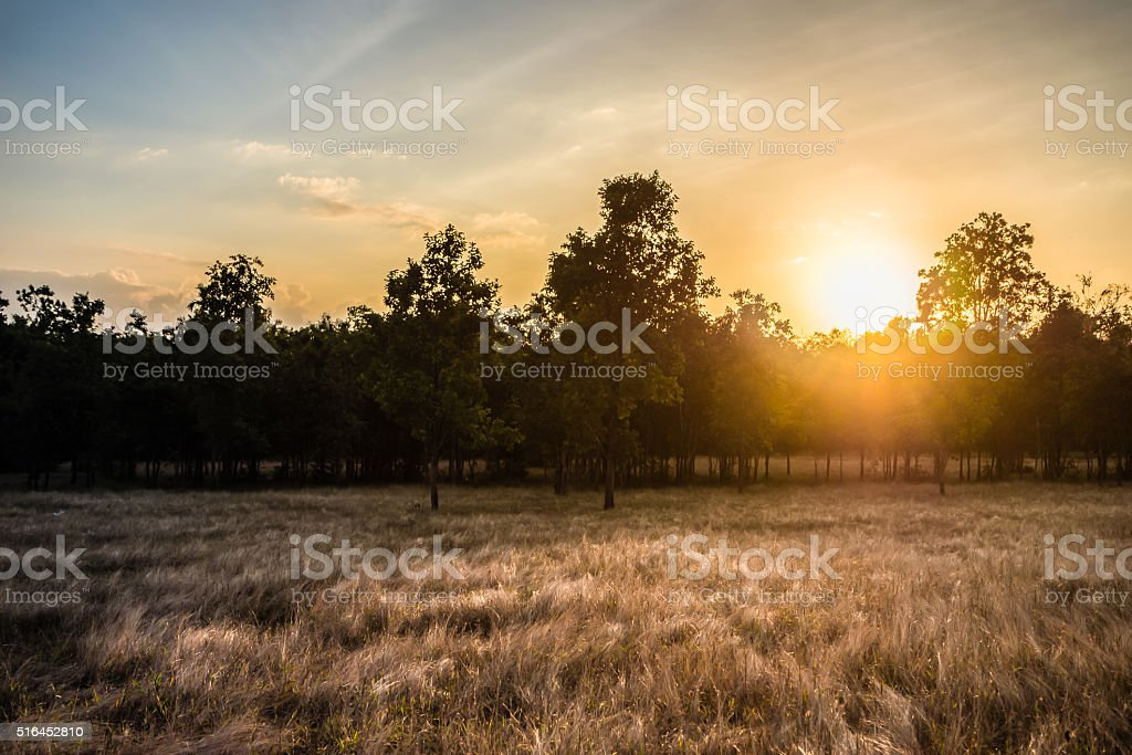 Silhouette of trees and arid meadow. stock photo