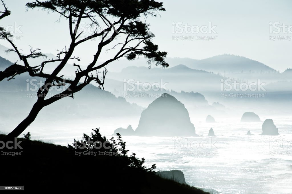 Silhouette of Trees on Misty Canon Beach, Oregon stock photo